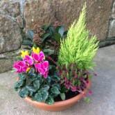 An awesome Winter/ spring outdoor planter