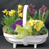 A fabulous Spring Planted Basket